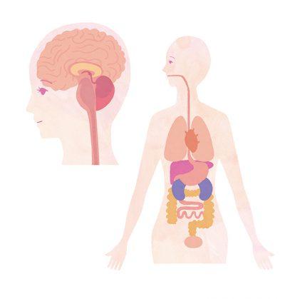 医療、体、体のしくみ、脳、人体
