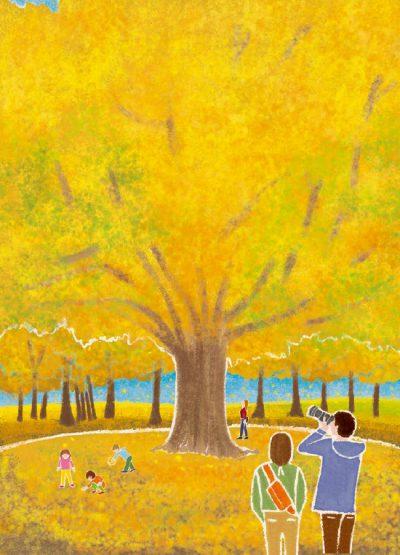 冊子表紙,秋,紅葉,自然,旅,山,木々,風景,景色,四季,春夏秋冬,大銀杏